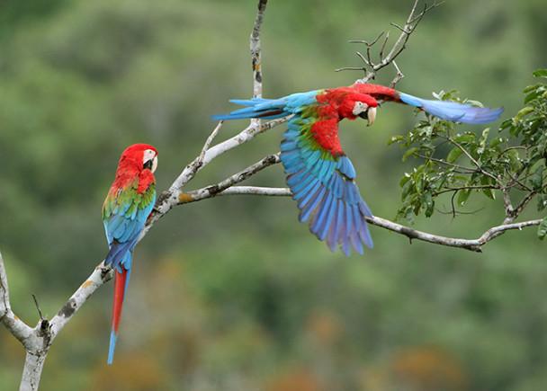 Museu da Amazônia comemora 10 anos