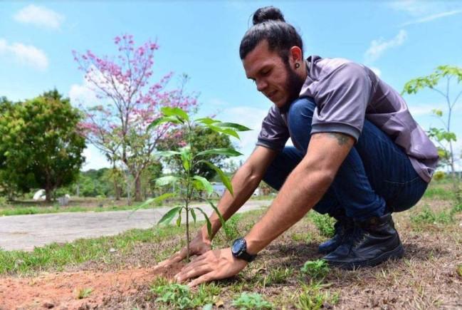 Musa doa mudas para plantio no Centro Cultural Povos da AmazA?nia